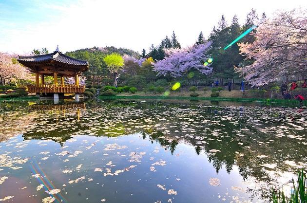 Nên đi du lịch Hàn Quốc vào mùa nào?